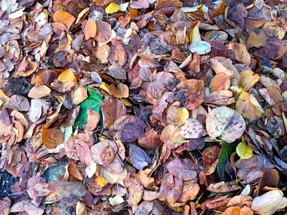0-leaves